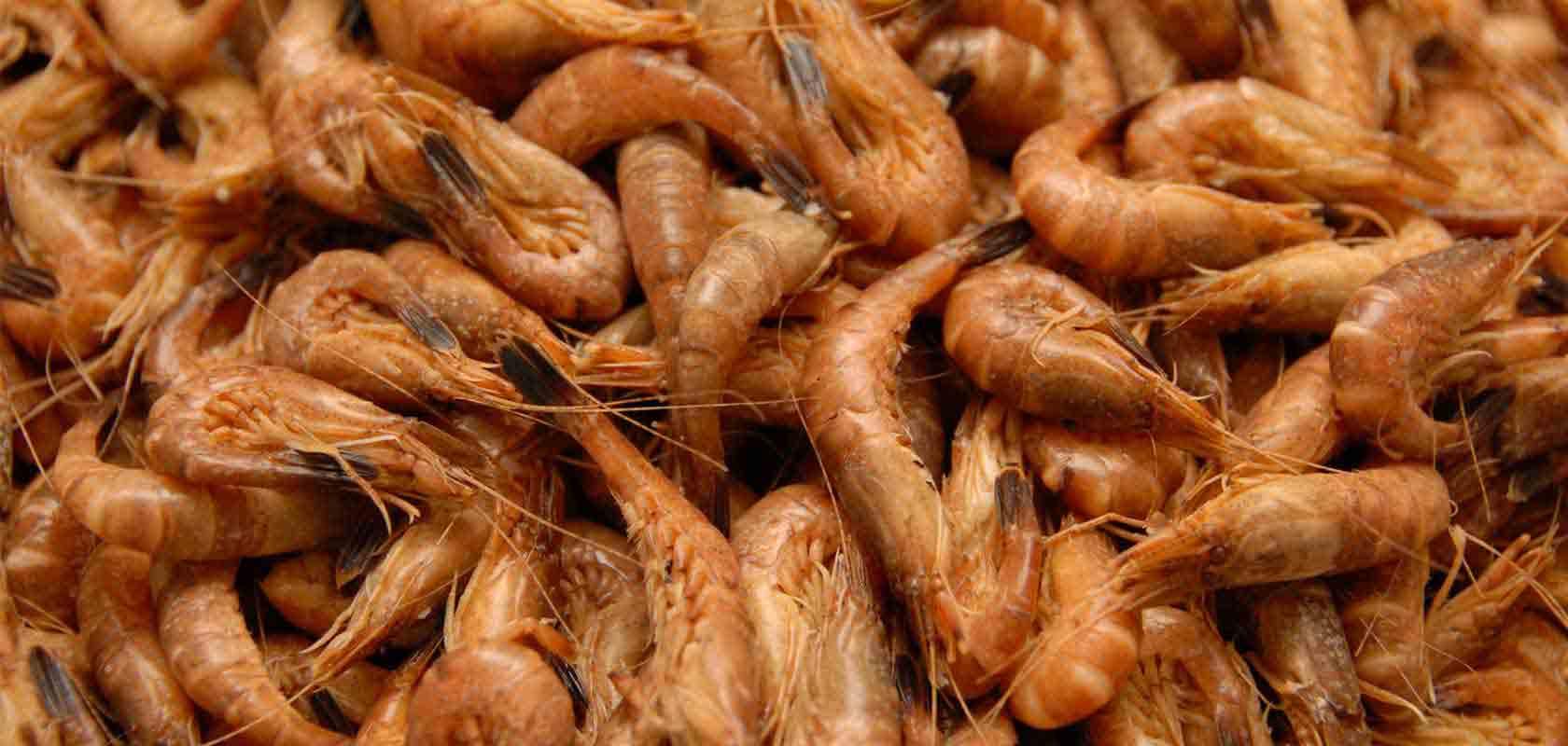 Edgar Madsen - fiskebutik - engros - eksport - frisk fisk fra Hvide Sande