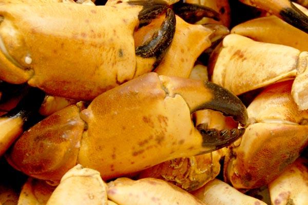 Friske krabbekløer